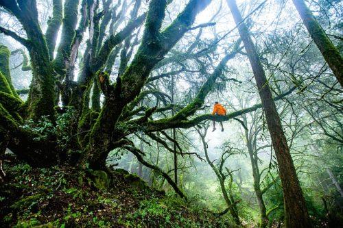 Personnage assis sur la branche d'un arbre gigantesque, dans une forêt tropicale